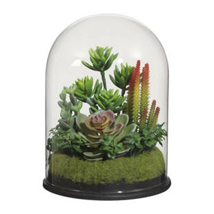 Composizione di piante grasse in vaso di vetro m1035694 for Composizione di piante grasse in grande vaso
