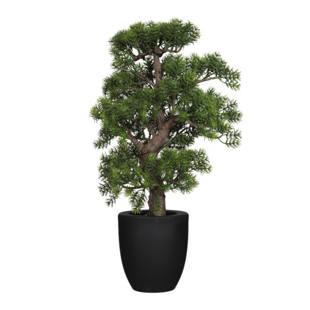 bonsai japanische kiefer m1035858 kaiser kraft deutschland. Black Bedroom Furniture Sets. Home Design Ideas