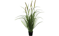 Tall oat grass, set of 2