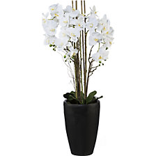 Phalaenopsis-Arrangement in Vase