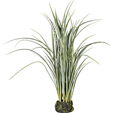 Chinese silver grass