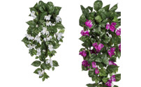 Hanging bougainvillea, set of 3