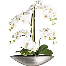 Moth orchid in a silver ceramic bowl