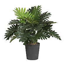Monstera, realtouch